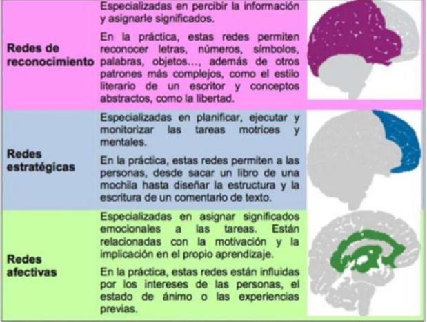 Redes_cerebrales_y_aprendizaje