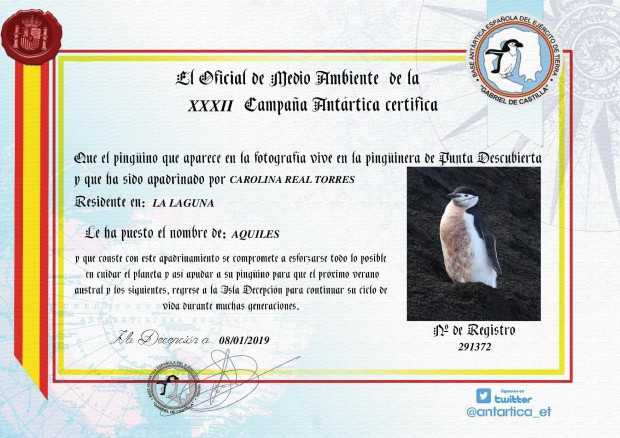 diploma pingüino-1